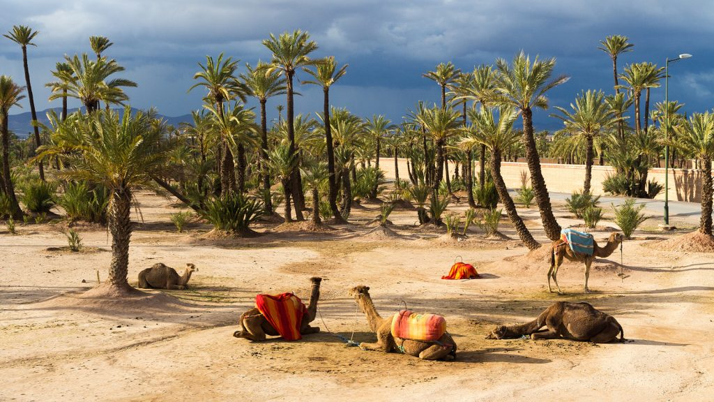 Camel Riding And Excursion From Marrakch